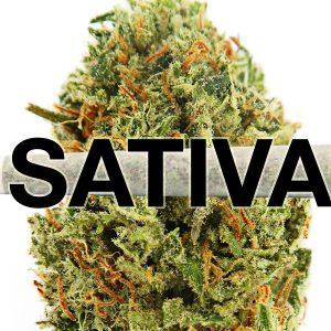 Sativa Marijuana
